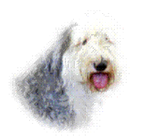 "Mr J (Newchurch) supporting <a href=""support/old-english-sheepdog-rescue-and-welfare"">Old English Sheepdog Rescue & Welfare</a> matched 2 numbers and won £5.00"